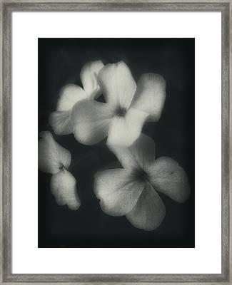 Simply Floral Framed Print by Rhonda Barrett