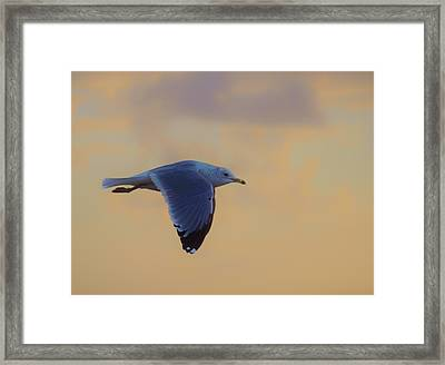 Simply Flying Framed Print