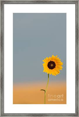 Simply Kansas Framed Print