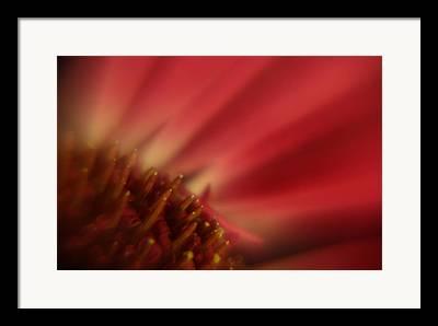 Cut Flowers Photographs Framed Prints