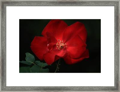 Simply Red Framed Print by Donna Kennedy