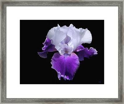 Simply Royal Framed Print