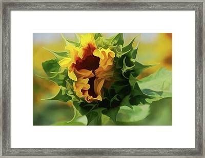 Simply Soft Elegant Sunflower Framed Print by Aimee L Maher Photography and Art Visit ALMGallerydotcom