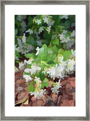 Simply Soft Jasmine In Bloom Framed Print