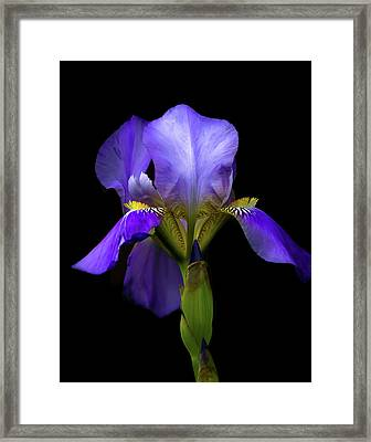 Simply Stunning Framed Print