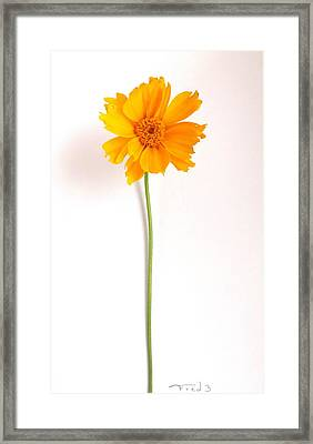 Simply Sunny Framed Print by Fred Wilson
