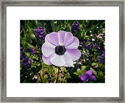 Simply Sweet Framed Print