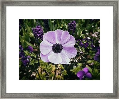 Simply Sweet Framed Print by Karen Stahlros