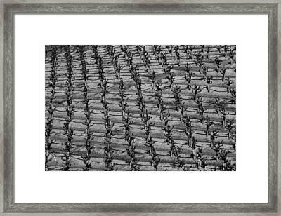 Simply Vines Framed Print by Jerohn  Brunson