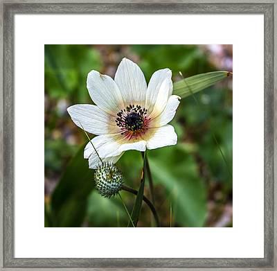Simply White Flower Framed Print