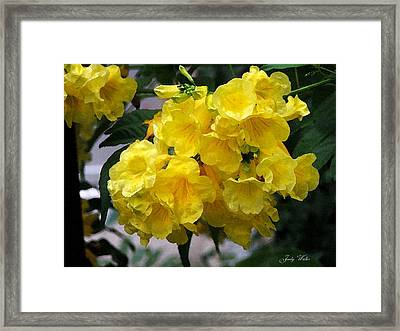 Simply Yellow Framed Print by Judy  Waller