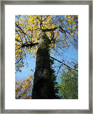 Simply Yellow Framed Print by Ken Day