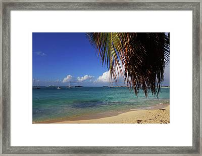 Simpson Bay Palm Tree Caribbean St Martin Framed Print by Toby McGuire