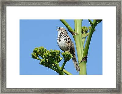 Framed Print featuring the photograph Sing A Song by Fraida Gutovich