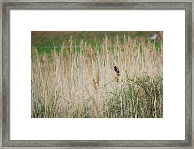 Framed Print featuring the photograph Sing For Spring by Bill Wakeley