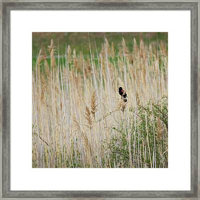 Framed Print featuring the photograph Sing For Spring Square by Bill Wakeley