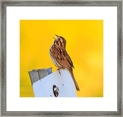Sing It Out Framed Print by Robert Pearson