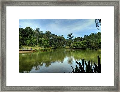 Singapore Botanical Gardens Framed Print