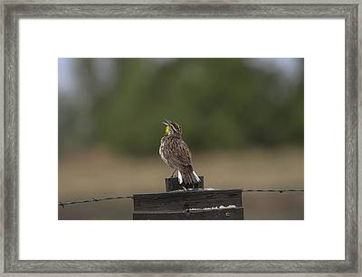 Framed Print featuring the photograph Singing A Morning Song by Monte Stevens