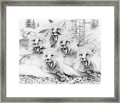 Singing Foxes Framed Print by Bob Patterson