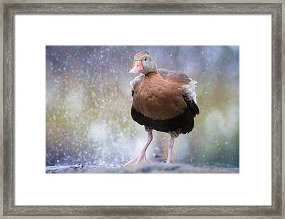Framed Print featuring the photograph Singing In The Rain by Cindy Lark Hartman