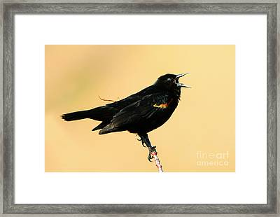 Singing In The Sun Framed Print by Mike Dawson