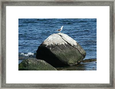 Framed Print featuring the digital art Singing Seagull by Barbara S Nickerson