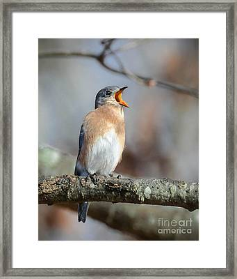 Singing This Song For You Framed Print