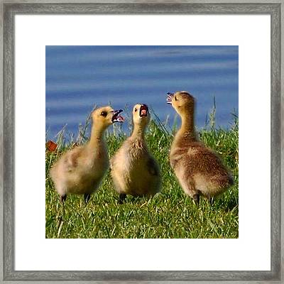 Framed Print featuring the photograph Singing Trio by Sumoflam Photography