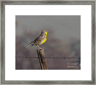 Framed Print featuring the photograph Singing Warbler by Debby Pueschel