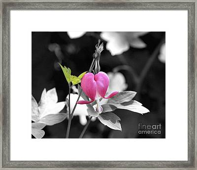 Single Bleeding Heart Partial Framed Print