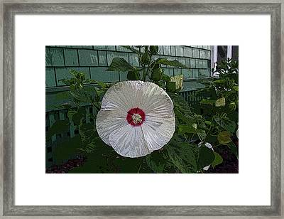 Single Bloom Framed Print