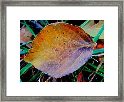 Single Brown Leaf Framed Print by Beth Akerman