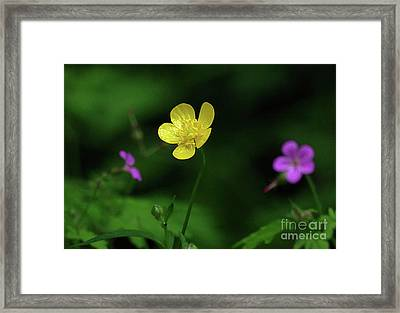 Single Buttercup Two Stinky Bob Framed Print