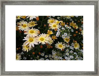 Framed Print featuring the photograph Single Chrysanthemums by Kathryn Meyer