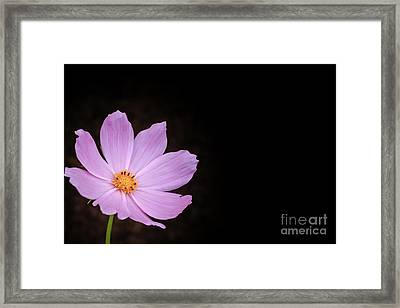 Single Cosmos Framed Print