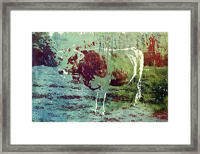 Single Cow Framed Print by Jutta Maria Pusl