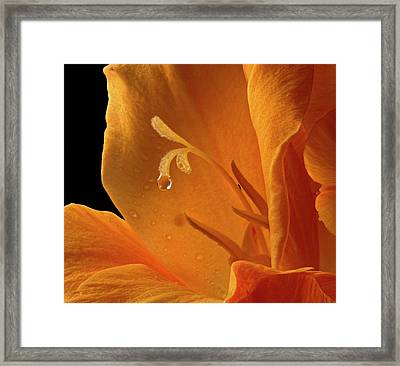 Single Drop Framed Print by Jean Noren