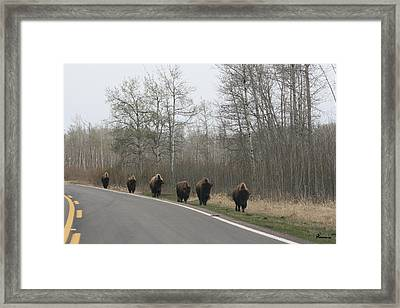 Single File Now Framed Print by Andrea Lawrence