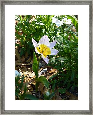 Single Flower - Simplify Series Framed Print by Carla Parris