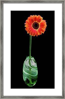 Single Gerbera Framed Print by Jean Noren