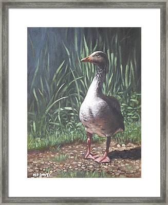 Single Goose Framed Print by Martin Davey