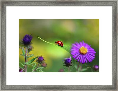 Single In Search Framed Print by Christina Rollo