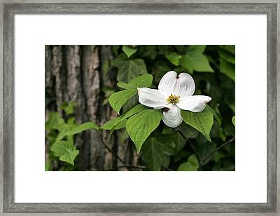 Single Framed Print by JC Findley