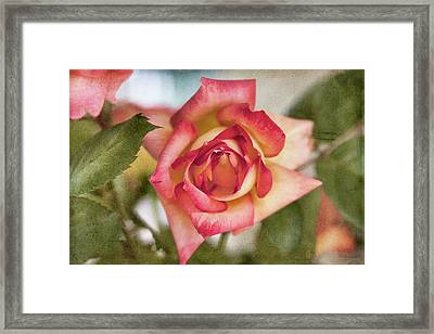 Single Framed Print by Joan Bertucci