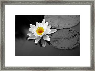 Framed Print featuring the photograph Single Lily by Shari Jardina