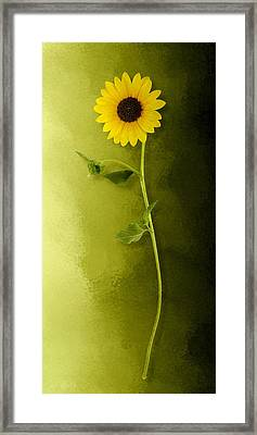 Framed Print featuring the photograph Single Long Stem Sunflower by Debi Dalio