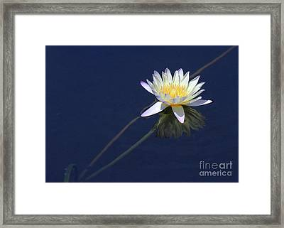 Single Lotus Framed Print