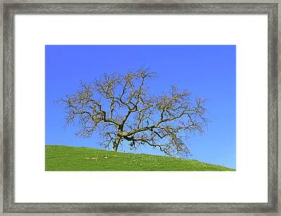 Framed Print featuring the photograph Single Oak Tree by Art Block Collections