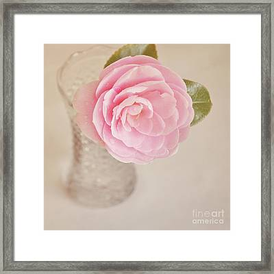 Framed Print featuring the photograph Single Pink Camelia Flower In Clear Vase by Lyn Randle
